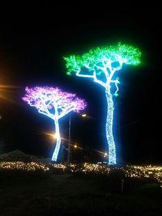 보성 빛축제