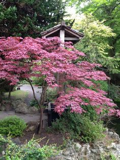 Jardin japonais du haras national de Dublin en Irlande