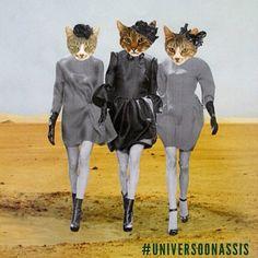 Hoje é sexta-feira! #universoonassis