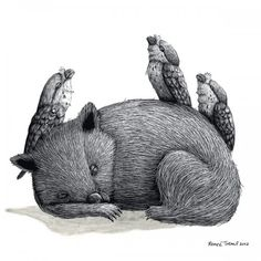 One very tired wombat and 3 frogmouths print - Renee Treml