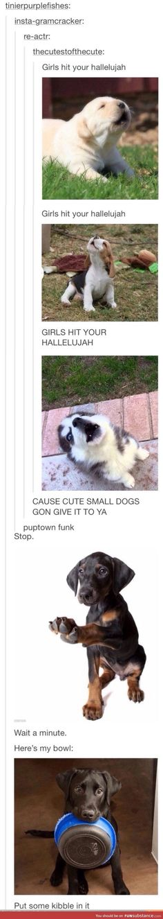 Puptown Funk. SATURDAY I BE IN THE KITCHEN, DONT LOOK AWAY JUST WATCH. (The dog is begging for food): Awe ️ ️ ️ ️, Puptown Funk, Text Posts, Animal Humour, Tumblr Posts, Uptown Funk Funny, Funny Tumblr