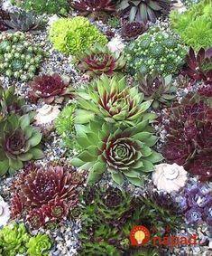 Ak máte na skalke túto rastlinku, máte šťastie: Dokáže zatočiť s alergiou a ďalšími chorobami, takto ju využijete naplno! Succulent Landscaping, Health Advice, Aloe Vera, Landscape, Flowers, Plants, Masky, Room, Decor