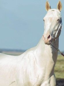 Why People Are Calling This Animal 'The Most Beautiful Horse In The World'