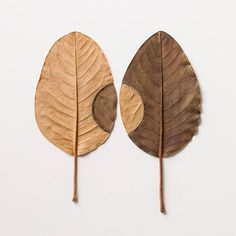 Susanna Bauer is a German artist now based in the UK. She creates stunning embroideries on magnolia leaves that she gathers, deforms and destructures. She played with colors and characteristics of the natural elements to imagined new ones. An impressive fastidiousness that enables her to keep the orignal shape of le leaves.