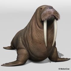 walrus but waaayy small