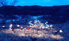 Instalações de artista transformam florestas em cenários mágicos