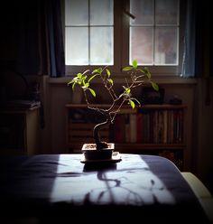 http://browndresswithwhitedots.tumblr.com/page/51