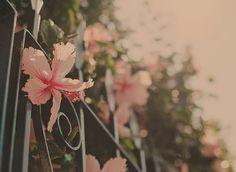 Poderíamos, com mais frequência, tentar deixar a vida em paz para desembrulhar suas flores no tempo dela, no tempo delas, e, em alguns momentos, nem desembrulhar. Apesar da nossa cuidadosa aposta nas sementes, algumas simplesmente não vingam e isso não significa que a vida, por algum motivo, está se vingando de nós. Há muito mais jardim para ser desembrulhado... (ana jácomo)