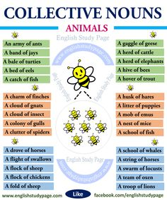 Collective Nouns – Animals – English Study Page