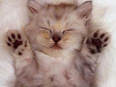 Cat is sleeping ..