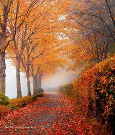 Love fall!