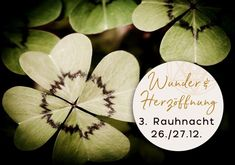 """Günter Kerschbaummayr on Instagram: """"DRITTE RAUHNACHT: WUNDER UND HERZÖFFNUNG  Die ersten beiden Nächte haben uns bereits für Wunder vorbereitet. Wenn du im Frieden mit deinen…"""" Plant Leaves, Plants, Instagram, Peace, Night, Heart, Plant, Planets"""