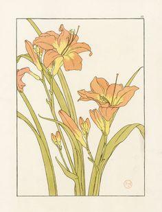 Фурд Pochoir Цветочные Исследования 1901