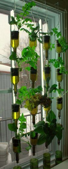 Vertical Veggie Garden with Reclaimed Wine Bottles! Home grown organics all winter. System by BioCity of Montreal, Quebec, Canada. Sustainable Design for the Eco Home - This is so pretty