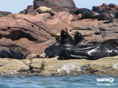 Isla Espiritu Santu, Baja #California.