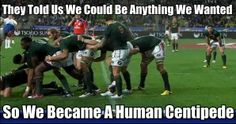 human centipede Rugby Rules, Rugby Gear, Hair Meme, International Rugby, Irish Rugby, Feel Good Friday, Rugby World Cup, All Blacks, Rugby League
