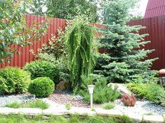 Vegetable Garden Design, Plants, Landscape Design, Conifers Garden, Evergreen Garden, Japanese Garden, Outdoor Gardens, Landscape, Backyard