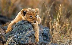 Londolozi, Londolozi Game Reserve, Sabi Sands Game Reserve