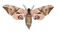 Hawk Moth, Fashion Sites, Photo Projects, National Museum, Science And Nature, Insects, Explore, Tat, Animals