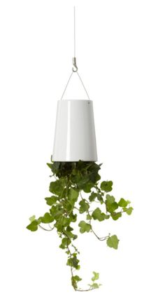 Defying gravity, our unique upside-down planter encourages abundant greenery at home and at work, without sacrificing floor space. The Boskke Sky Planter's unique reservoir feeds water gradually to the plant's roots. Because there is no excess water to Ceiling Hooks, Ceiling Lights, Water Conservation, Ceramic Planters, Home Living, Hanging Planters, Modern Lighting, Indoor Plants, Indoor Garden