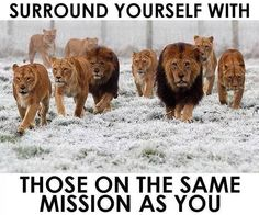 Do you want a better life?  Choose carefully who you surround yourself with.   http://track.mobetrack.com/aff_c?offer_id=986&aff_id=575034