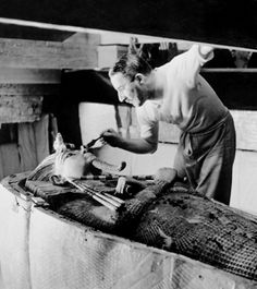 Howard Carter delicately, if somewhat theatrically, brushes the second of three coffins nesting one inside another within King Tutankhamun's large quartzite sarcophagus. (The inner coffin, which held Tut's mummy, was made of solid gold, while the outer two were made of gilded wood.) Carter made sure that the world learned of his spectacular 1922 discovery by inviting British photographer Harry Burton (1879–1940) to document the finds.