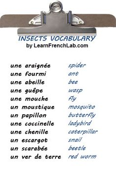 Free Audio Lesson. Learn vocabulary for Insects in French.