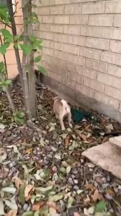 Cute Little Animals, Cute Funny Animals, Funny Dogs, Cute Cats, Cute Animal Videos, Cute Animal Pictures, Cute Creatures, Animals And Pets, Wild Animals