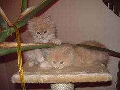 meine Katzen Crazy & Lee
