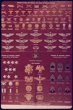 """""""Insignia of the Army of the United States"""" - NARA - 514627 - United States Army enlisted rank insignia of World War II - Wikipedia, the free encyclopedia Army Ranks, Military Ranks, Military Insignia, Military History, Gi Joe, Us Military Medals, Military Uniforms, Military Decorations, United States Army"""