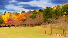 Autumn colours in Nara by Salawin Chanthapan / 500px