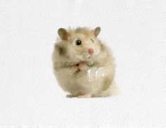 Hamster Watercolor Painting Art Print Animal watercolor beige white grey pink Home Decor Wall Decor Kitchen Decor Beach Decor on Etsy, $20.00