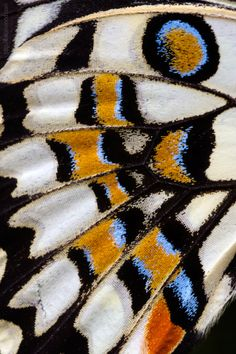 The butterfly wings, tight and close Butterfly Pattern, Butterfly Wings, Natural Forms, Natural Texture, Patterns In Nature, Textures Patterns, Painting Inspiration, Art Inspo, Moth Wings