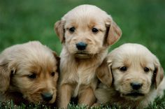 puppies | Nicholas Dodman , Puppy's First Steps: The Whole-Dog Approach to ...
