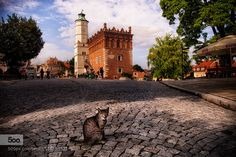 Cat in the city - Pinned by Mak Khalaf City guard City and Architecture animalsarchitecturebuildingcatcityeuropepolandratuszryneksandomierz by KrzysztofMackiewicz
