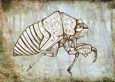 Cicada shell by r. grace
