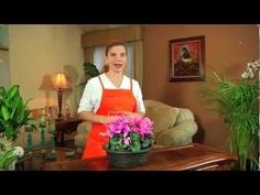 Te damos tips y consejos para cuidar las plantas en el interior de tu hogar.