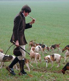 Eton College Beagles - Windsor,  Berkshire,  England