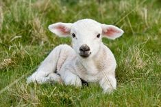 8 Ways to Show Your Love for Farmed Animals This Valentine's Day - ChooseVeg.com