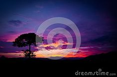 Beautiful color of sky sunset and alone tree. dusk landscape of sky and a alone tree