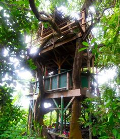 Treehouse accommodations in Kaua'i - I'd never come down, this one has a kitchen and living room in the middle and a bedroom (with an ocean view) at the top! Hana Lani treeshouses...
