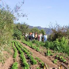 Consilience Enhances Resilience: A Key Element of CSA Farms - Nature and Environment - MOTHER EARTH NEWS