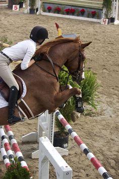 The ocean equestrian