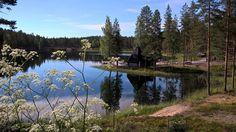 "74 tykkäystä, 3 kommenttia - Rokua Health & Spa Hotel (@rokuahealthspa) Instagramissa: ""Juhannusaattoaamu Rokualla #midsummer #juhannus #aamu #morning #linnunlaulu #rokua #visitrokua…"" Hotel Spa, Finland, River, Mountains, Health, Nature, Instagram Posts, Outdoor, Salud"