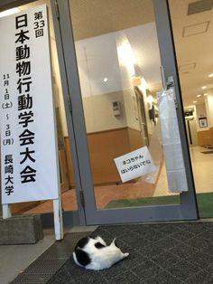 "Hayvanlar ilgili konferanste kedi içine gelmesin diye kediye not koymuş 猫専用の張り紙 A sign ""There is no entrance for cats. Nature Animals, Animals And Pets, Funny Animals, Cute Animals, I Love Cats, Cool Cats, Mr Cat, Soft Kitty Warm Kitty, Japanese Funny"