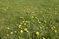 How to Make a Weed-and-Feed Lawn Care (4 Steps)   eHow