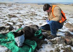 Center for Biological Diversity: Reward for Information Jumps to $15,500
