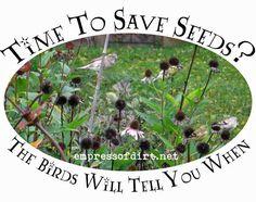 Time to save seeds? | empressofdirt.net