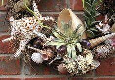 DIY Shell Wreath....add a few air plants//