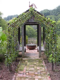 Espalier tunnel, photo: Justin Stelter. - this would be an amazing way to keep an orchard. I could see this being very long! Olives, apples, oranges, lemons, limes, pears oh my!